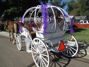 Qunice, pony and carriage rides at Plum farm 003
