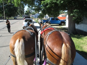 Qunice, pony and carriage rides at Plum farm 004