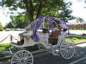 Qunice, pony and carriage rides at Plum farm 007