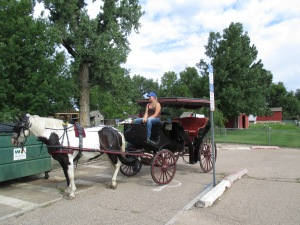 Qunice, pony and carriage rides at Plum farm 008