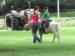 Qunice, pony and carriage rides at Plum farm 010