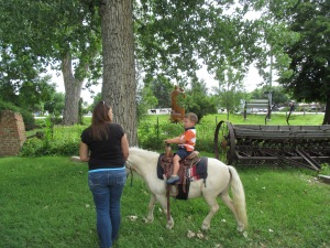 Qunice, pony and carriage rides at Plum farm 012