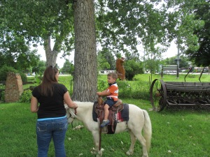 Qunice, pony and carriage rides at Plum farm 013