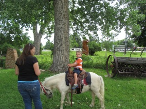Qunice, pony and carriage rides at Plum farm 014