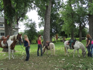 Qunice, pony and carriage rides at Plum farm 020