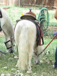 Qunice, pony and carriage rides at Plum farm 022