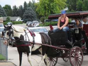 Qunice, pony and carriage rides at Plum farm 030