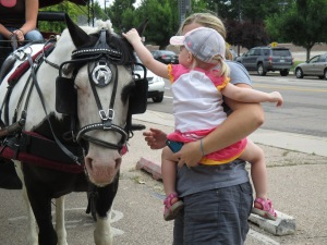Qunice, pony and carriage rides at Plum farm 033