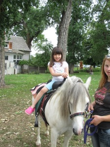 Qunice, pony and carriage rides at Plum farm 043