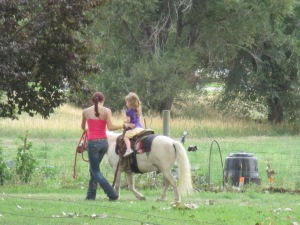 Qunice, pony and carriage rides at Plum farm 069