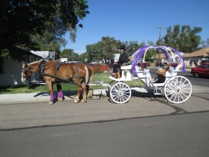 Qunice, pony and carriage rides at Plum farm 001
