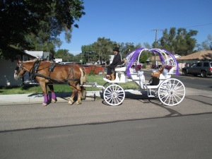 Qunice, pony and carriage rides at Plum farm 002