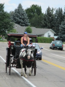 Qunice, pony and carriage rides at Plum farm 061