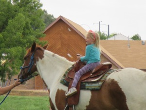 Qunice, pony and carriage rides at Plum farm 066