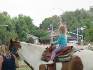 Qunice, pony and carriage rides at Plum farm 068