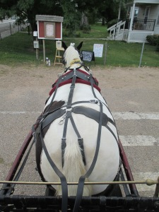 Qunice, pony and carriage rides at Plum farm 070